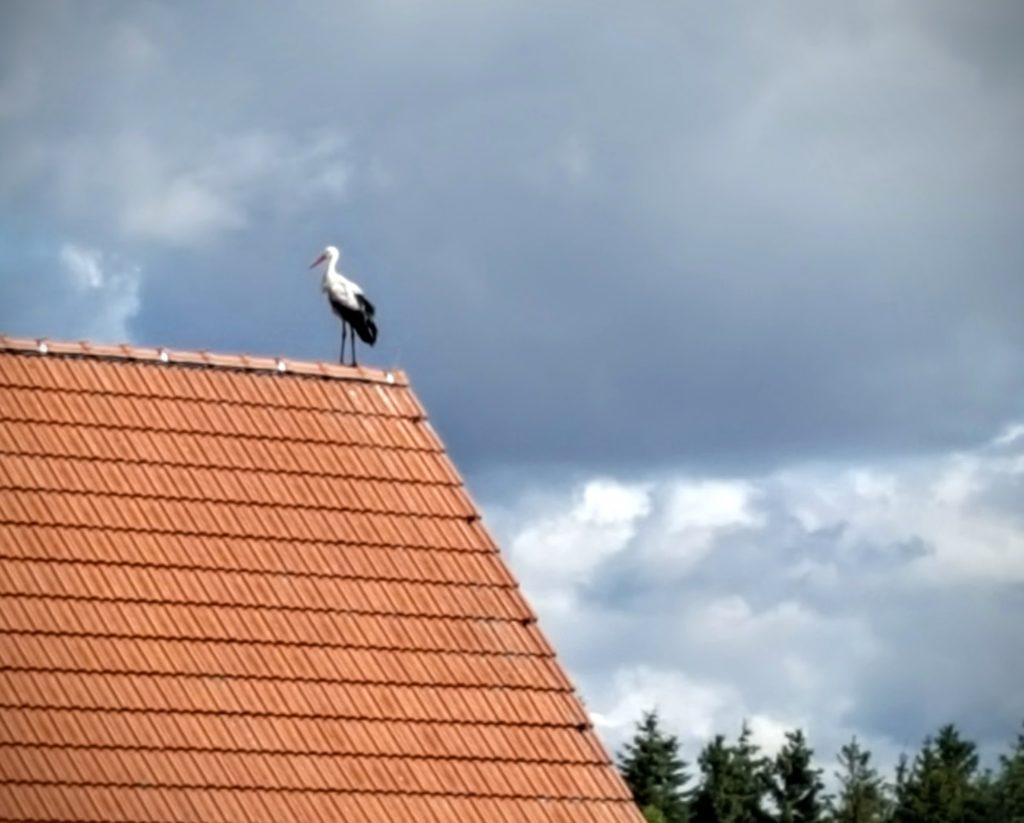 12von12: besser den Storch auf dem Dach