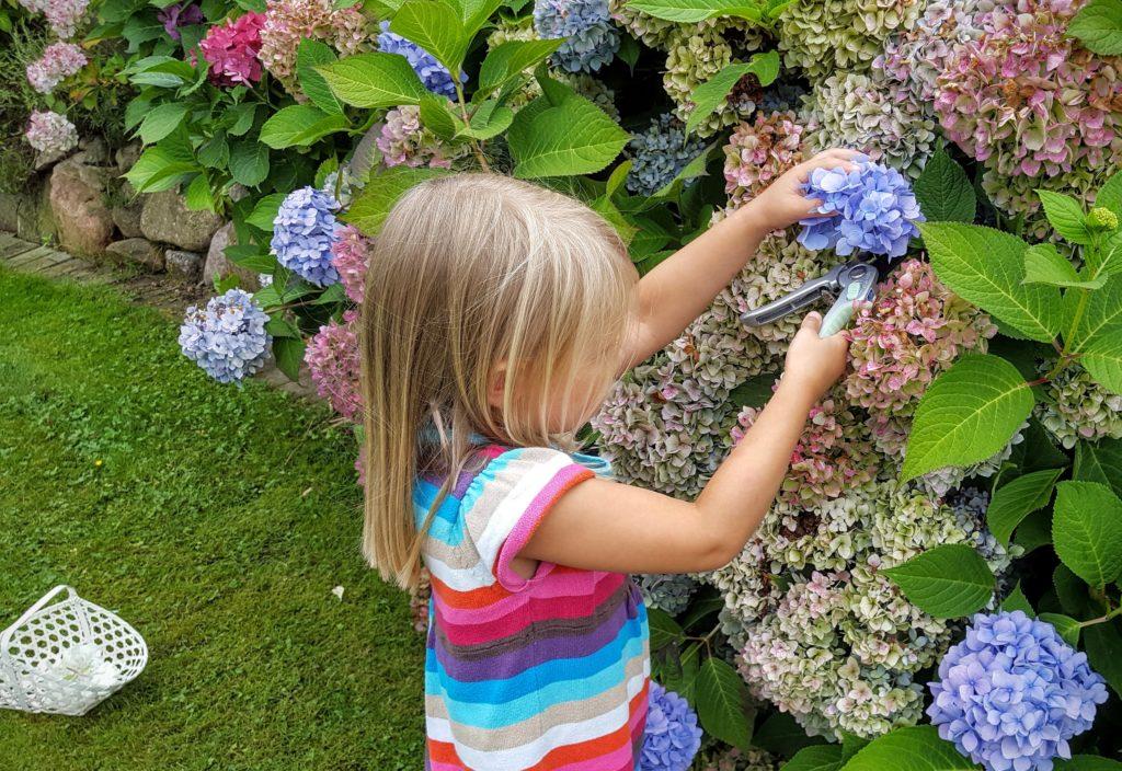 09 Blumen Wochenende in Bildern 20.08.16 Frau Piefke schreibt
