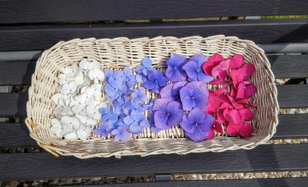 Blüten scheiden einzeln Was wollen wir machen Frau Piefke schreibt