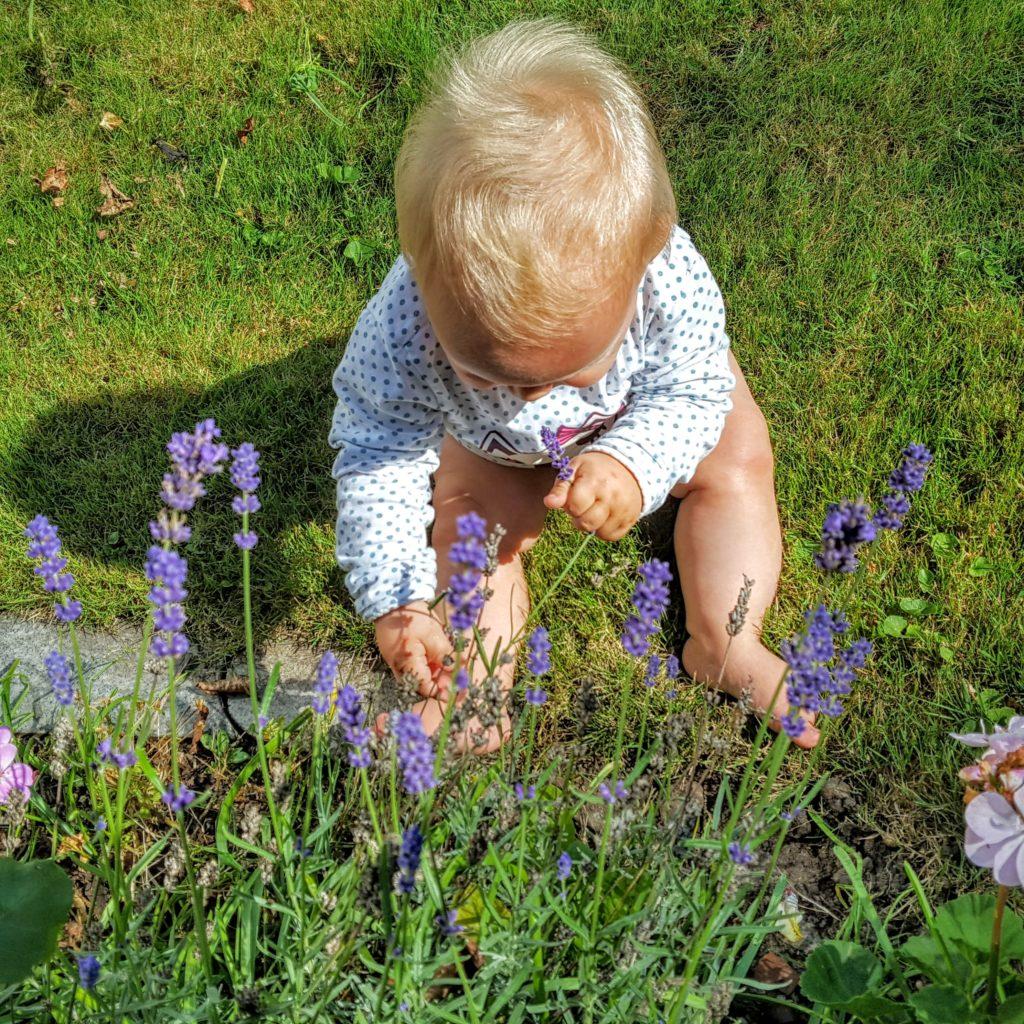 03 lavendel 12von12 frau piefke schreibt